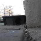 A final meal awaits rats who frequent the area around the Barclays Center.